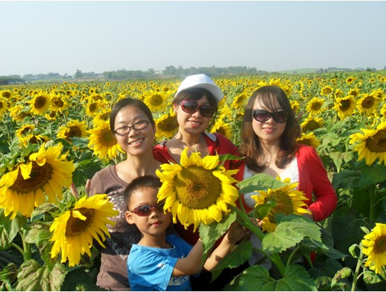8000 Acres Sunflower Field in Guangxi Wuxuan County