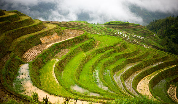 Had a Hiking Tour in Longji Rice Terrace