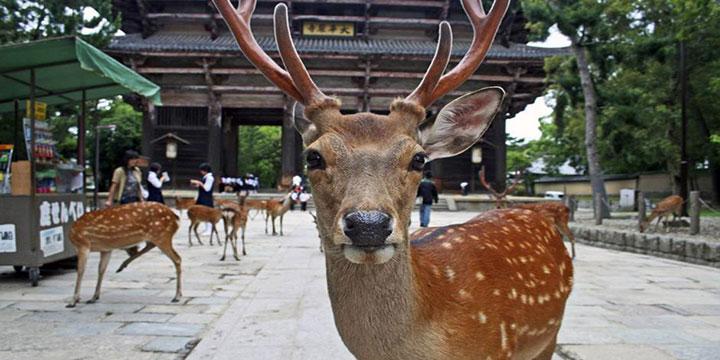 Parc de cerfs de Nara