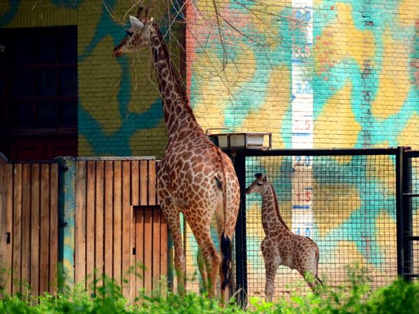 Beijing Zoo Panda House