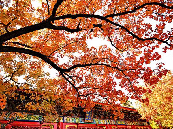 Resultado de imagem para xiangshan, em beijing