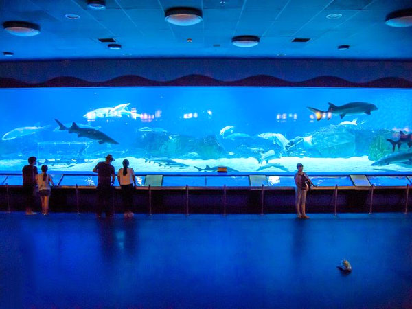 Top Aquariums and Ocean Worlds in China