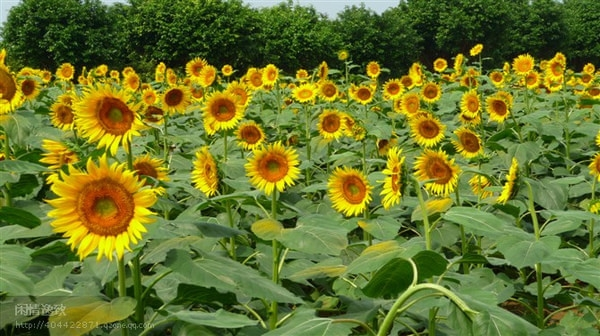 Best Place To See Flowers And Plants In Guangzhou Where