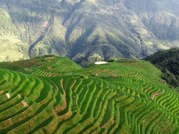 China Autumn Tour Destinations-Longji Rice Terrace, Longsheng