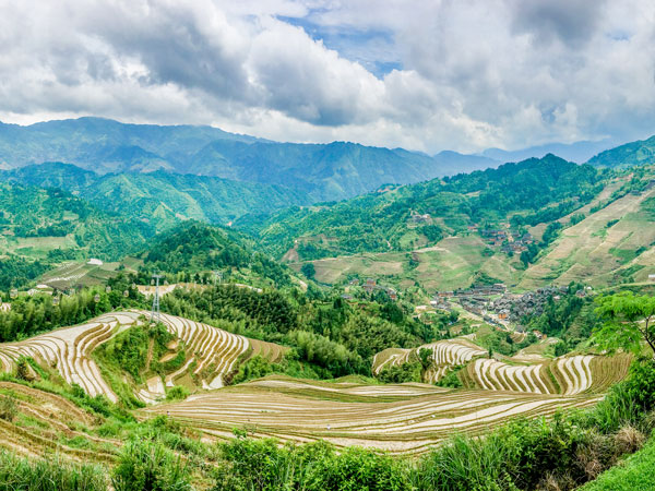 jinkeng-rice-terraces