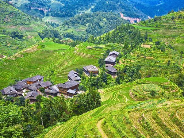 Jinkeng Rice Terrace
