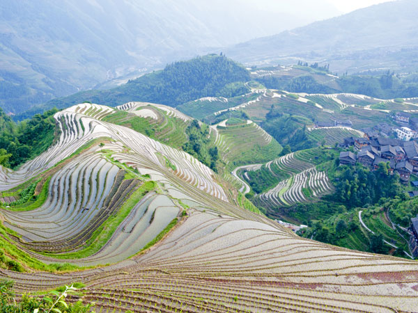 Jinkeng rice terraces in longji guilin dazhai rice for Terraces opening times