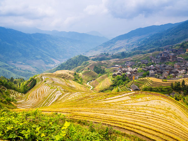 Jinkeng Rice Terraces