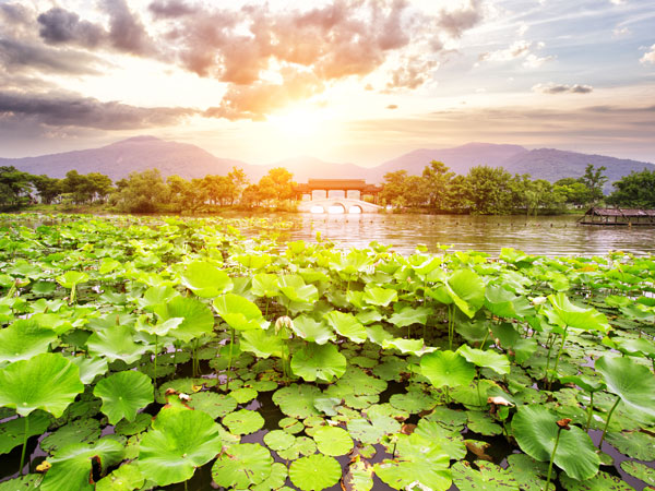 Appreciate Lotus Flowers at West Lake