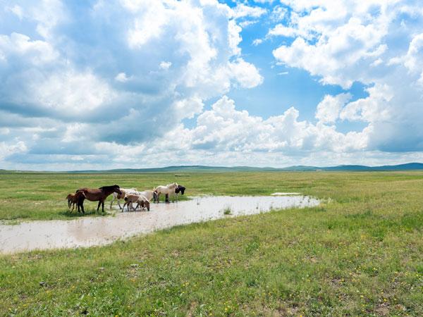 Xilamuren-Grassland