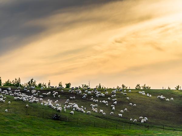 Hulun Buir Grassland in Old Barag Banner, Hulun Buir of ...