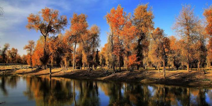 Ten Most Beautiful Forests in China - Untai Poplar Forest