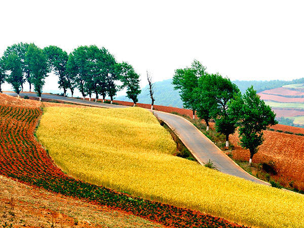 Dongchuan Red Soil