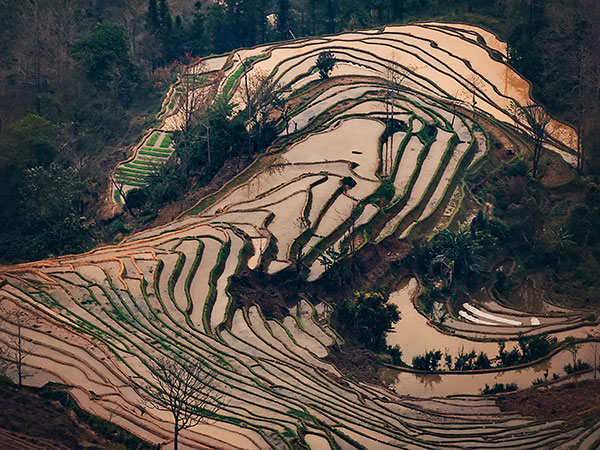 7 Days Yuanyang Rice Terraces Tour