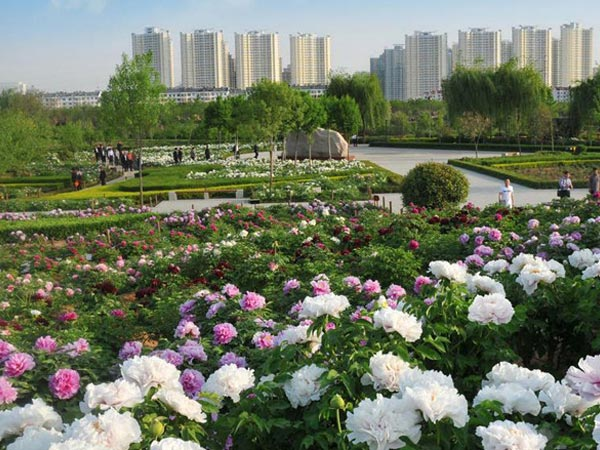 Peony Culture Festival of Luoyang