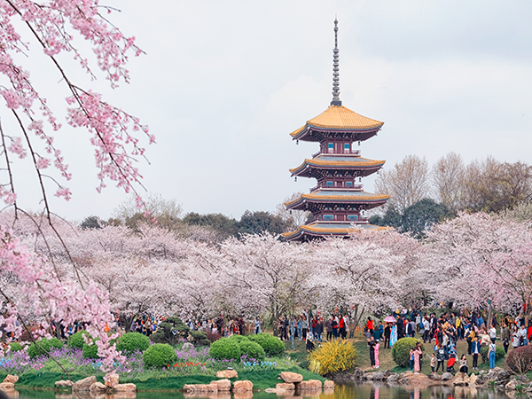 Best places to see spring blossoms in China