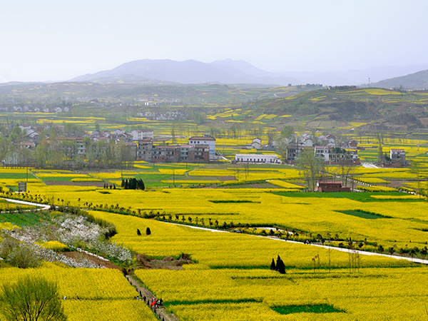 See Spring Flowers in Xi'an