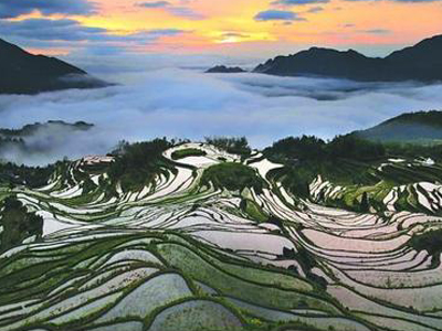 yunhe rice terraces china
