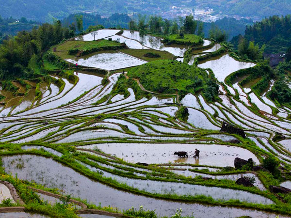 Yunhe rice terraces zhejiang one of the most beautiful for Terraces opening times